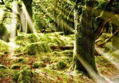 Fototapet Startonight Lumina in camera mea, luminos in intuneric, 3.66 x 2.56 m