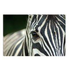 Tablou DualView Startonight Zebra, luminos in intuneric, 60 x 90 cm