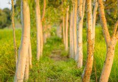 Fototapet Startonight Alee verde, luminos in intuneric, 3.66 x 2.56 m