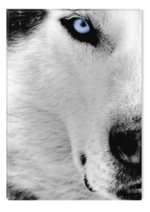Tablou Alb-Negru Abstract Startonight, Lup alb, luminos in intuneric, 60 x 90 cm