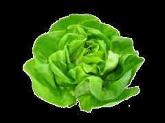 Salata verde Bio Romania
