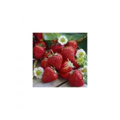 Set 20 servetele 33x33 cm, Strawberry