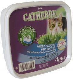 Seminte de iarba pentru pisici