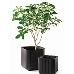 Ghiveci Cube L 50.5 L, imitatie lemn maro, Keter