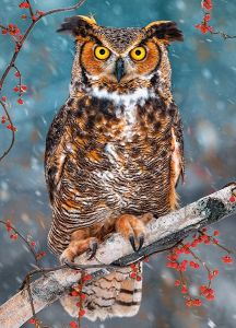Puzzle Castorland - Great Horned Owl, 260 Piese