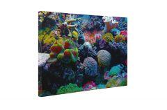 Viata subacvatica - Tablou Canvas - 4Decor