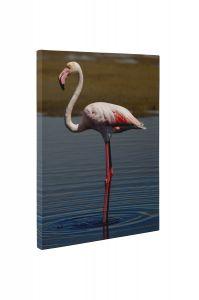 Flamingo singuratic - Tablou Canvas - 4Decor