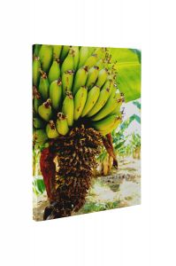 Banane - Tablou Canvas - 4Decor